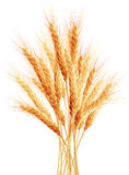 Stalks of wheat ears. EPS 10 Stock Photography