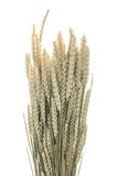 Stalks of wheat ears on white background Stock Photos