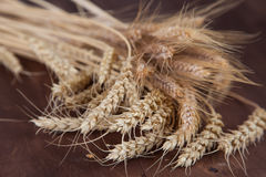 Stalks of wheat and rye Royalty Free Stock Photo