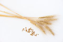 Stalks of wheat Stock Image