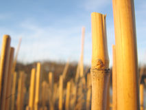 Stalks2 Royalty Free Stock Images