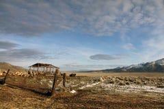 Stall auf der hohen Wüste Stockbild