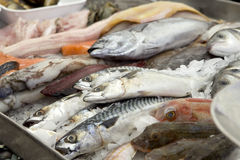 Stall of fishes at the fish merchant Royalty Free Stock Images