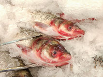 Stall of fishes at the market. Fresh fish at market Stock Image