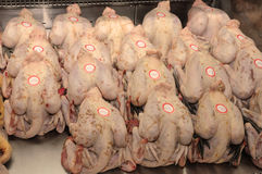 Stall of free range chiken in a farm in Brueil en Vexin Stock Photography