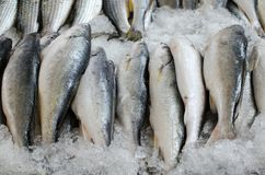 A stall of fresh fishes for sale royalty free stock photos