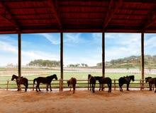 Stall och hästar arkivfoton