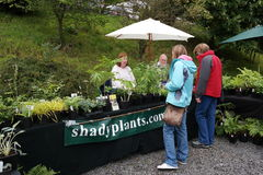 Stall selling plants with vendors Royalty Free Stock Image