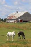 Stall und Pferde Stockfoto
