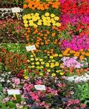 Stalla dei vasi da fiori e del prezzo da pagare Fotografia Stock