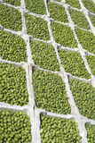 Stalla del mercato che vende le olive Fotografie Stock
