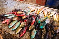 Stalle colorée de poissons Photographie stock