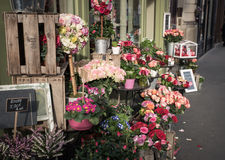 Stalle de fleur Photo libre de droits