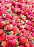 Stalle de marché de nourriture complètement des strawerries rouges frais avec le congé vert Images stock
