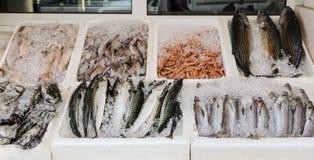 Stalle de poissonnerie avec les merlans bleus fraîchement pêchés, le thon de bonites, le maquereau atlantique, les seiches et les Photo libre de droits