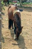 Stalle del cavallo Fotografie Stock