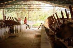 Stalle di pulizia dell'uomo nell'agricoltore Relaxing On Wall dell'azienda agricola Fotografia Stock Libera da Diritti