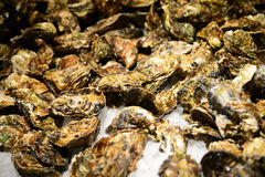 Stalle traditionnelle de poissonnerie complètement des huîtres fraîches de coquille Photographie stock libre de droits