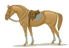 Stallion Royalty Free Stock Image