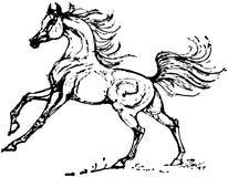 stallion stock illustratie