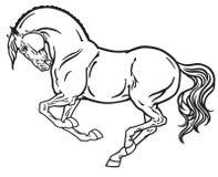 Stallion black white Royalty Free Stock Photography