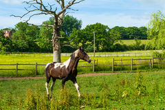 Stallion in a corral Stock Photos