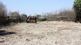 Stallion eat grass stock video