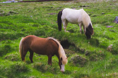 Stallion Eating Grass on Grass Field during Daytime Stock Photo