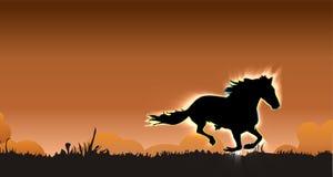 Stallion galoppante Immagini Stock