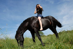 Stallion and girl Royalty Free Stock Image