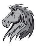 Stallion grigio arrabbiato Immagini Stock