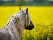 Stallion Headshot Stock Image