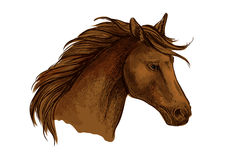 Stallion horse sketch of brown arabian racehorse Stock Photography