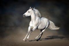 Stallion in motion on dark background stock photos