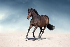 Horse run in dust stock images