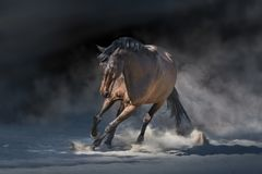 Dark horse in dust royalty free stock images