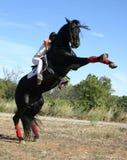 Stallion nero Fotografie Stock Libere da Diritti