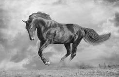 Stallion nero Fotografia Stock Libera da Diritti