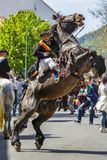 Stallion rearing with rider in Brasov, Romania. Brown spirited stallion rears with unidentified rider of Old Junii group during the old traditional parade of the stock photography
