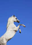 Stallion and sky Royalty Free Stock Image