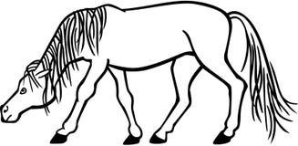 Stallion Snaking Royalty Free Stock Photos
