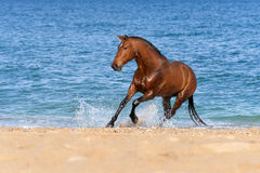 Stallion Springs on the sea beach Stock Images