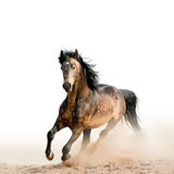 Stallion on a white Stock Image