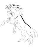 Stallion zieht Vektor auf Stockfotos