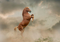 Stallion zieht Vektor auf Stockbild