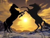 Stallions di combattimento Fotografie Stock Libere da Diritti
