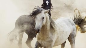 Free Stallions, Wild Mustangs Try To Dominate The Pools, Fighting Of Rivals Who Venture Too Close In The Desert Of Nevada, United Stock Photography - 136133542