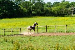 Stallone in un recinto per bestiame Fotografia Stock Libera da Diritti