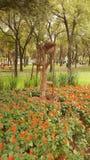 Stalowego przemysłu wspominki otaczający kwiatami Zdjęcie Stock