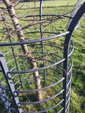 Stalowej ramy chronienia młody drzewo ii obraz stock